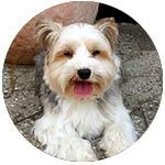 Unser Hund Tony